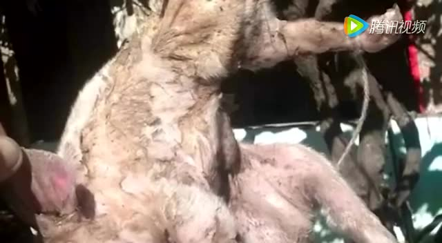吃惊吐血的动物图片