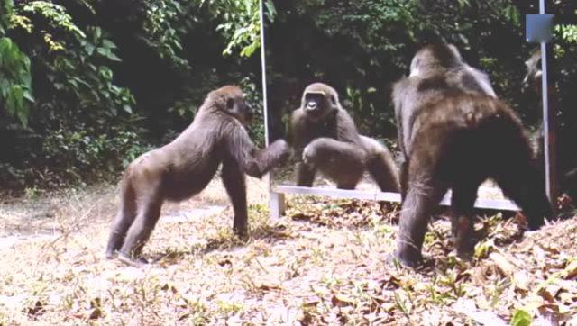森林里安装了面镜子,动物们都来瞧热闹,猜猜镜子里面是谁?