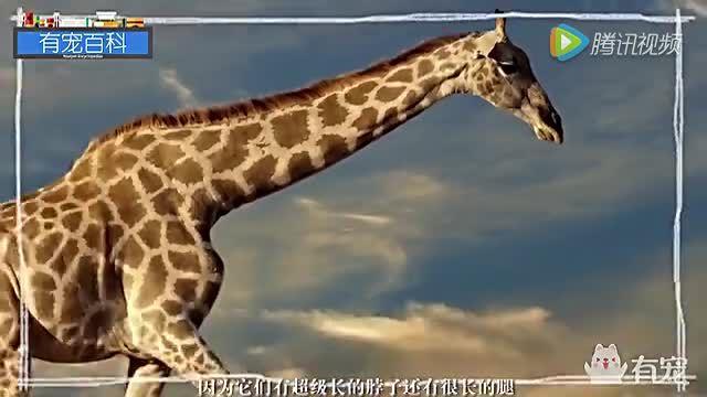 世界上最高的哺乳动物