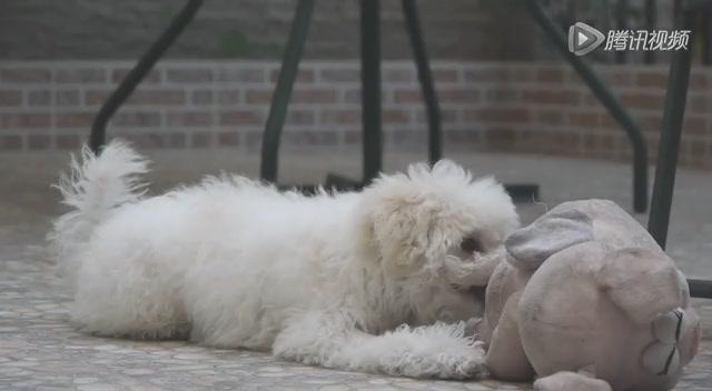 《我的狗狗我的爱》宠.爱截图