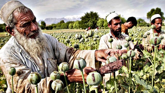 德国开始向阿富汗遣返难民 facaishu