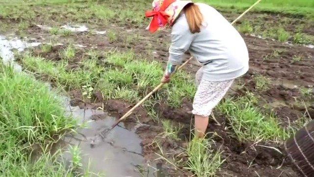 农村姑娘去水沟里舀水捉鱼