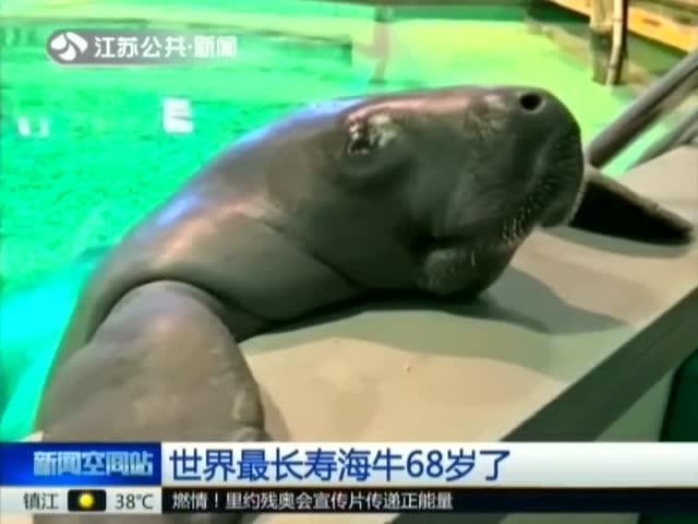 世界最长寿海牛68岁了