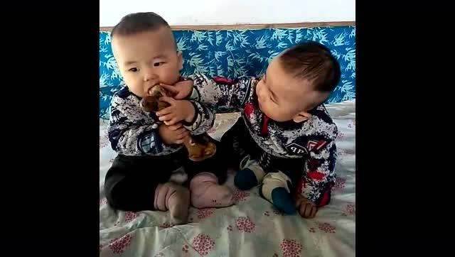 傻爸爸给双胞胎宝宝一根骨头抢着吃