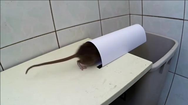 纸巾老鼠折法图解