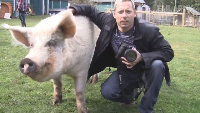 二零一七年1月农场动物作弄愚蠢人类的各种悲剧搞笑