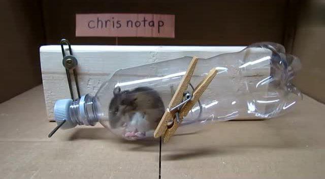 教你用矿泉水瓶做一个捕鼠器 老鼠别想逃
