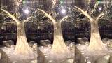 视频: 澳门永利赌场:天崩地裂富贵吉祥发财树
