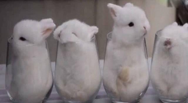 呆萌小白兔 怎么全睡杯子里啦!