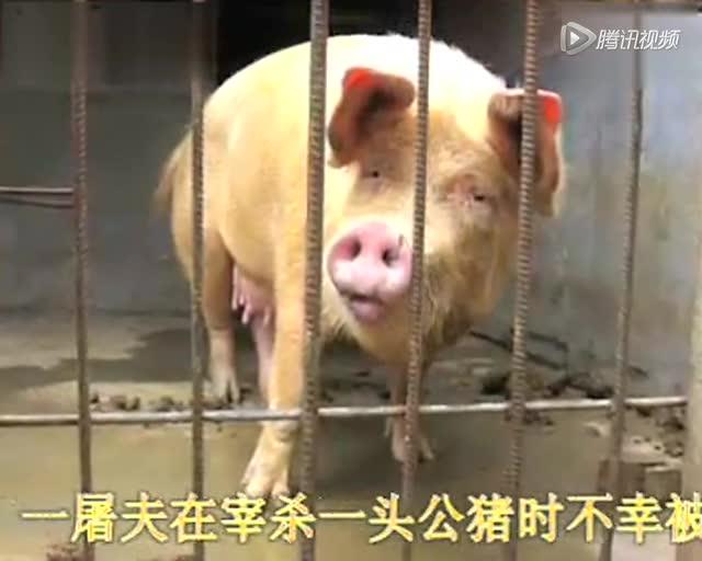 2015,感动中国10大动物!