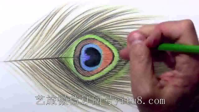 铅笔手绘孔雀羽毛 让艺术轻舞飞扬