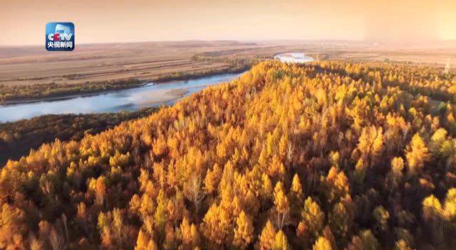 一分钟带你看那大兴安岭的秋天