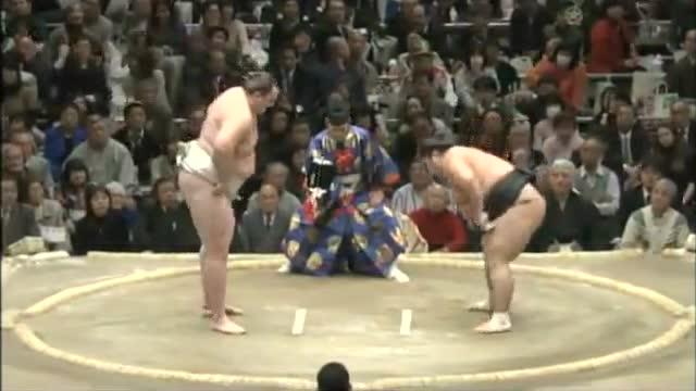 """日本""""史上最可爱女相扑手""""爆红"""
