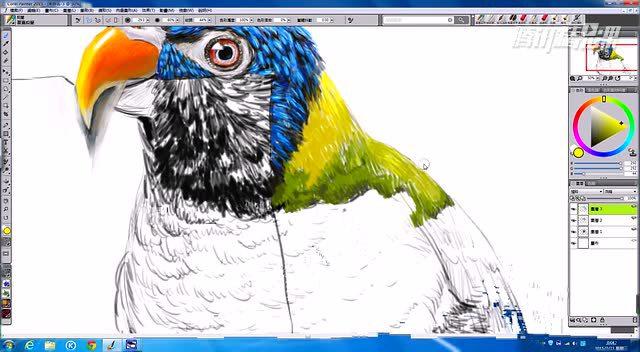 创意绘画第40集:鹦鹉的素描