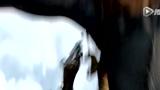 《驯龙高手2》首曝预告 乘龙高飞开启全新冒险