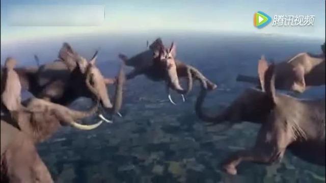 动物做极限运动会是什么样的!
