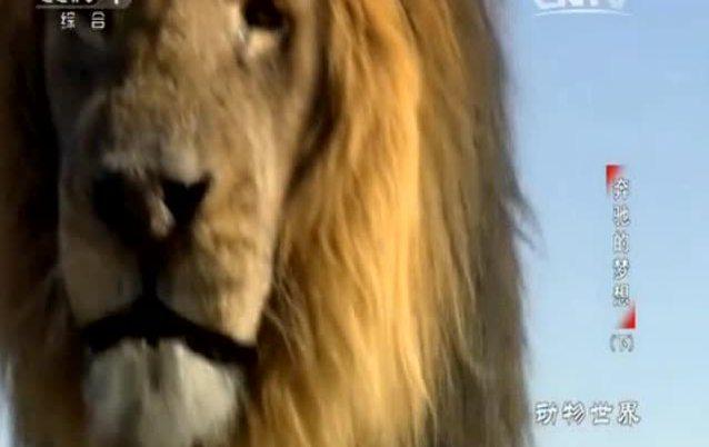 母狮子让男朋友给自己挠痒痒