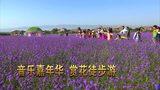 宁夏中卫大漠黄河旅游节宣传片