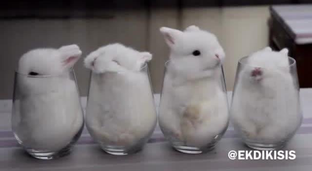 小兔子变吃东西边洗脸