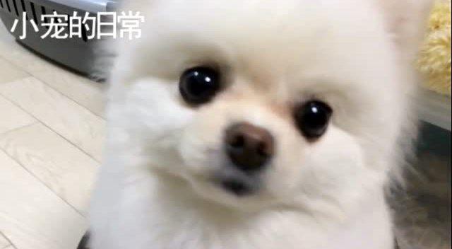 这只狗狗生气的样子,好可爱