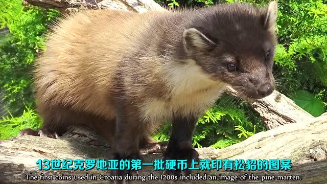 5大奇葩国宝动物 @柚子木字幕组
