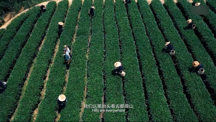 话茶:一片树叶的故事 六