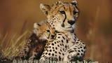 动物界的亲情@##¥%%¥##皇冠现金网官网