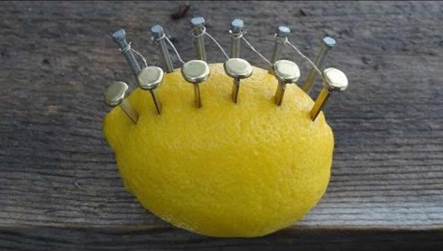 水果刻绘矢量图