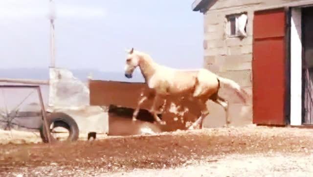 传说中世界上最贵的马