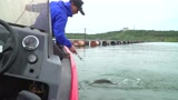 丹江口水库,子弹狙击拦网翘嘴。
