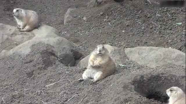 疯狂动物城 杭州野生动物园
