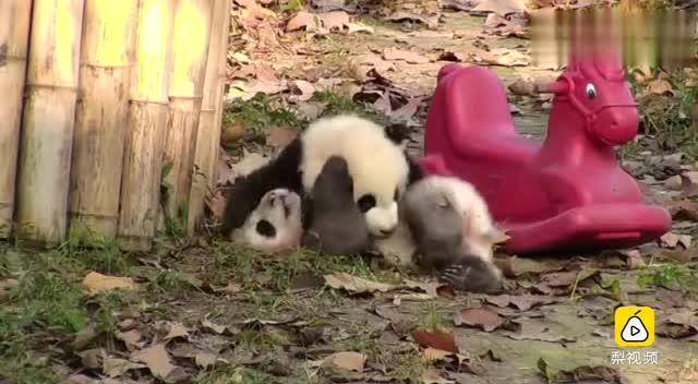 疯狂动物园-袋鼠圣僧