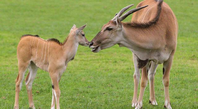 亚马逊河10种最可怕的动物
