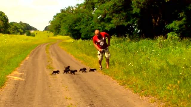 8只刚出世的小狗崽找不到妈妈,结果追着主人跑,场面太逗!