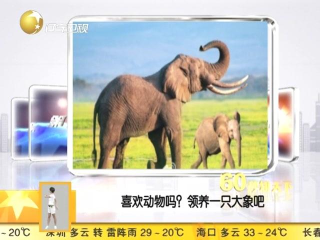 喜欢动物吗?领养一只大象吧