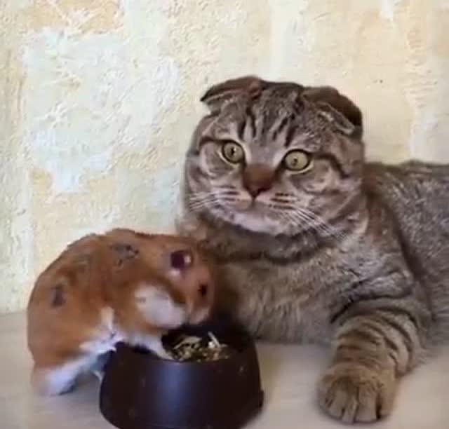 小仓鼠在自己厨房玩,都吃蜘蛛还在啃梦见完了爬到自己手上吸血图片