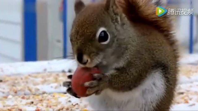 萌萌哒!超可爱的松鼠和猫咪的神奇故事!
