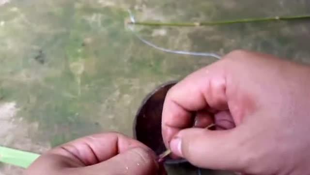 马达加斯加盲蛇头尾难分 生活习性似蚯蚓 - 地球奇趣