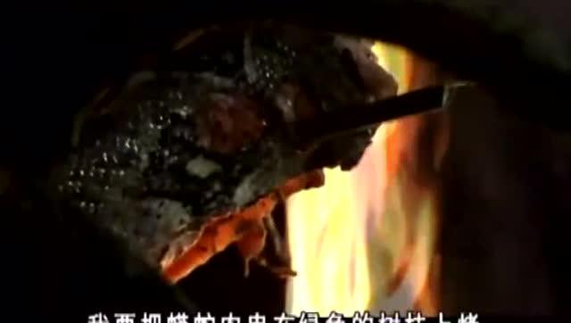 贝爷吃掉了世界上最可怕的动物