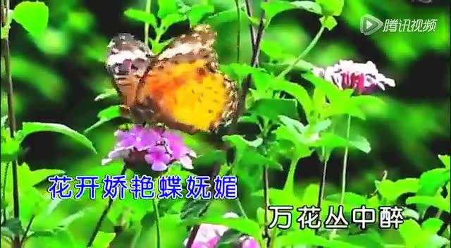 红尘蝶恋简谱歌谱