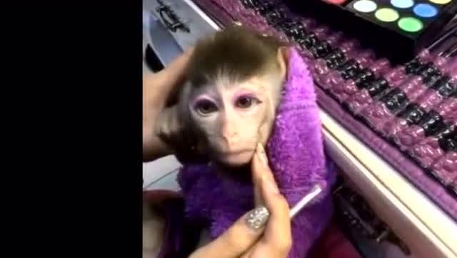 小猴子化了妆美美哒