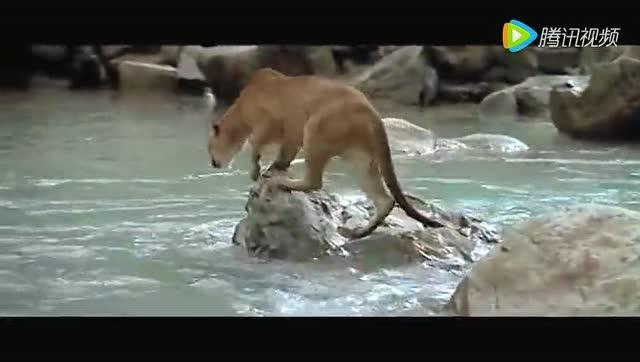 最有趣的动物故事 堪称大作!