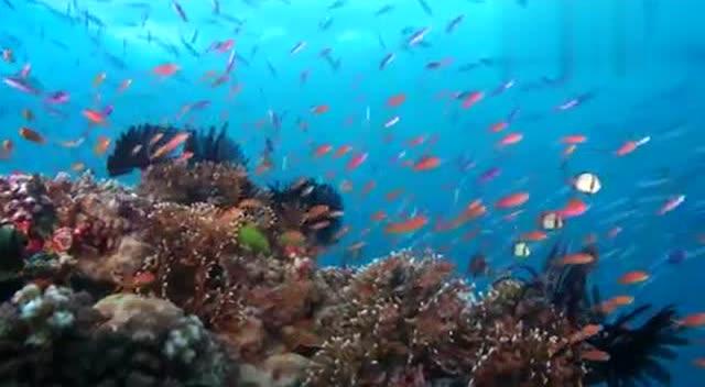 大堡礁:世界最大的珊瑚礁群,海岛式的浪漫分分钟捕获你的芳心!
