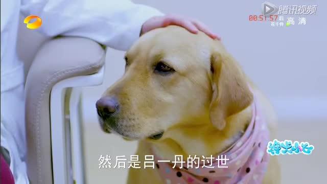 《神犬小七》金世佳闯大祸