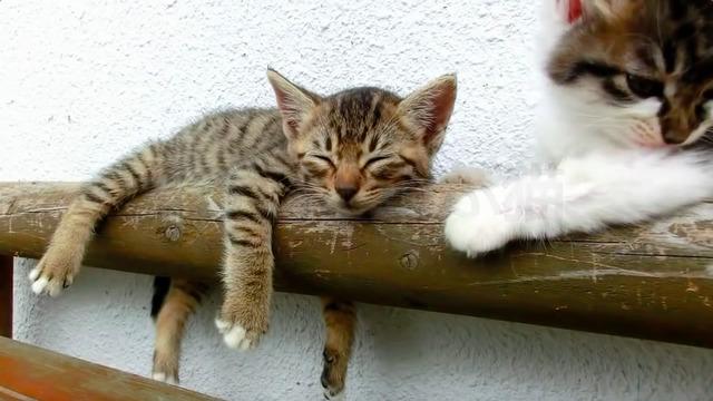网友家里的两只猫咪睡觉的时候抓耳挠腮真可爱!