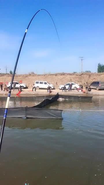 黑坑钓大鱼,这种饵料很适合钓鲤鱼