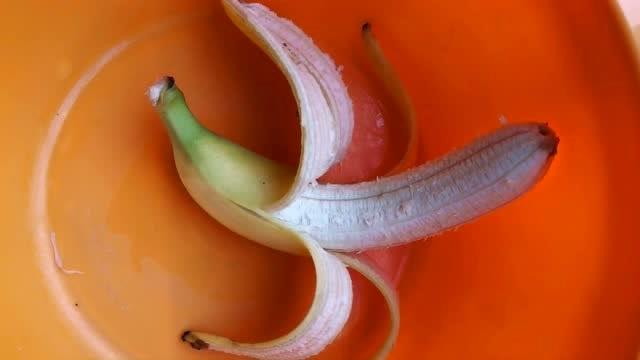香蕉拉饵,鲤鱼草鱼抢着吃