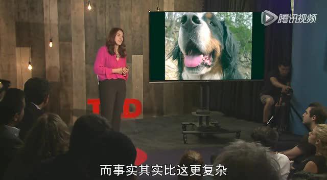 劳雷尔·布特曼:动物忧郁的背后指引着什么