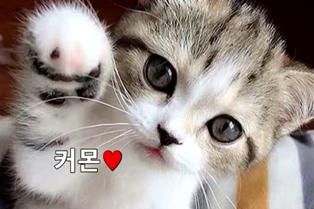 猫咪视频_超可爱的猫咪视频