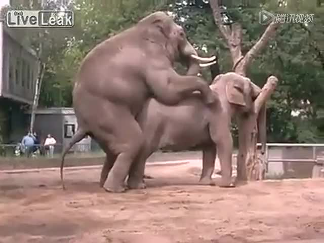 骑美女做爱_实拍大象做爱 美女尖叫
